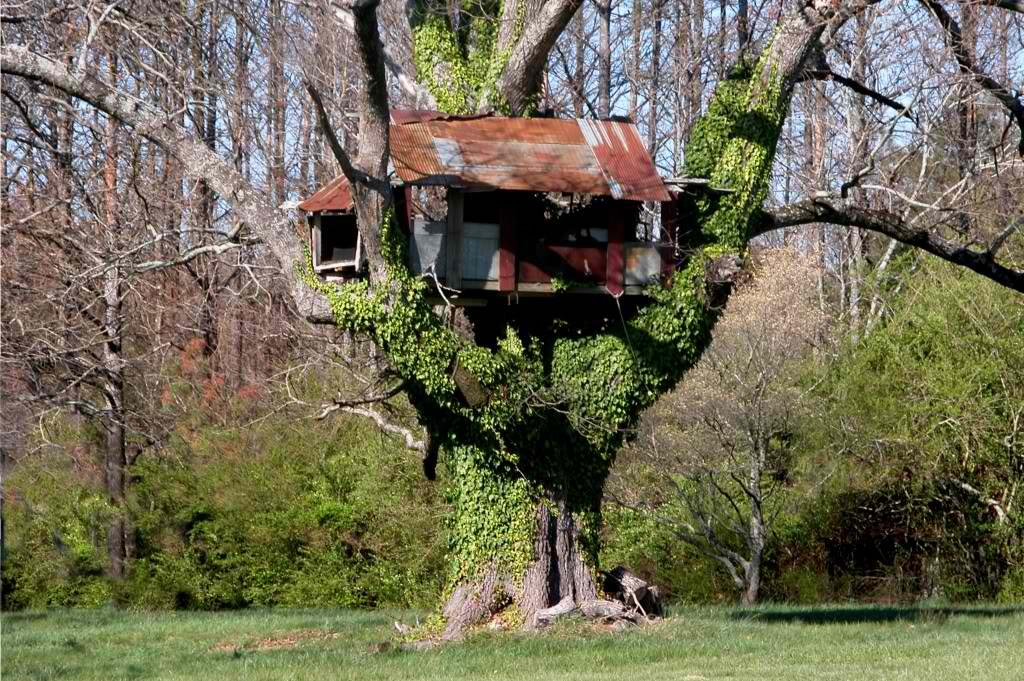 OldTreehouse.jpg